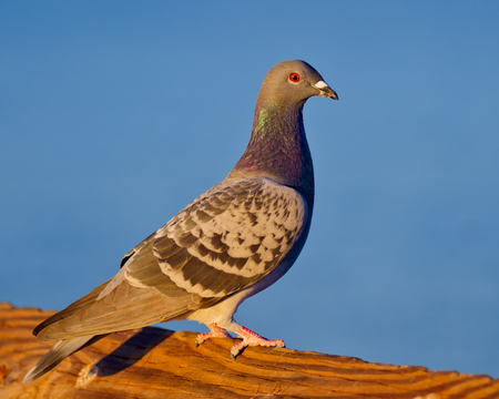 handrail: Pigeon perched on the handrail Stock Photo