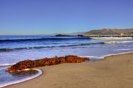 alga marina: Oc�ano algas encuentra en el surf. Foto de archivo