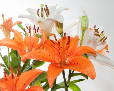 Bouquet of orange and white stargazer lilies stock photo picture bouquet of orange and white stargazer lilies stock photo 48176860 mightylinksfo