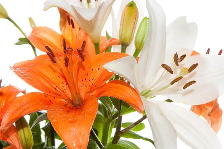 stargazer lily: Close view of Orange and white stargazer lily flowers. Stock Photo