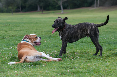 enticing: Playful dogs ready to wrestle.