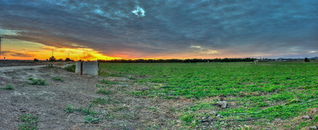 weeds: Panoramic view of cirrocumulus clouds over field of weeds, Stock Photo