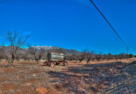Panoramic view of apricot orchard with snow in background. Stok Fotoğraf