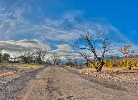 empedrado: Los �rboles y los �rboles j�venes de invierno alrededor de la carretera asfaltada. Foto de archivo