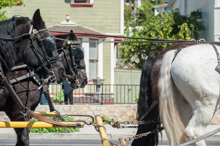 blinders: First and second horse teams for the stagecoach.
