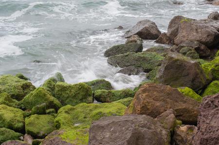 Green algae covers rocks in breaking surf. Stock Photo