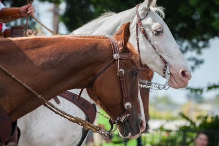 Brown horse in front of white head. Stock Photo