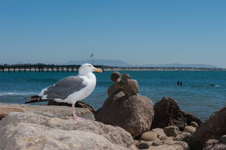 balanced rocks: Seagull perched on rocks with surfers in background.