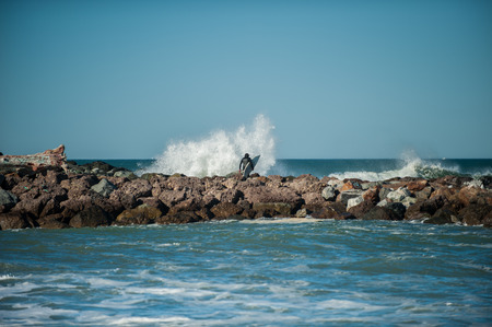Adventurous surfer walking out on rock jetty as waves crash against it to avoid paddling out to the waves.