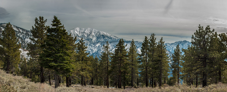 pacific crest trail: Panoramic view of Blue Ridge covered in snow with Sequoia trees of Angeles National Forest.