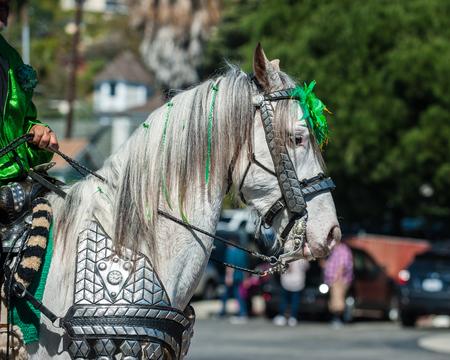 animal st  patricks day: Elegant costume white horse head in St Patricks Day parade.