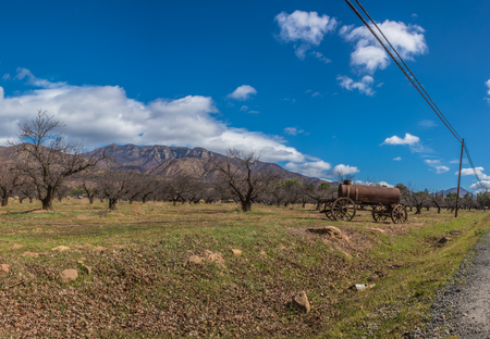 Country scene showing winter orchard trees under cloudy blue sky with Topa Topa Mountain ridge in the distance.