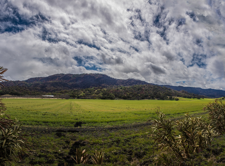 Green field of grass growing in the rural country under cloudy skies nestled against the mountains.