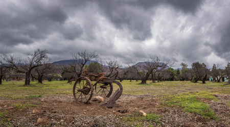 Vintage and rustic plow trailer in foreground of tree orchard in winter under blustery rain clouds.