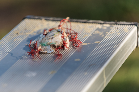 Baseball cover frayed, tattered, and smashed onto stadium bleacher seats.