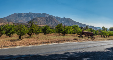 Topatopa Peak visible behind the fruit tree orchard of upper Ojai Valley.