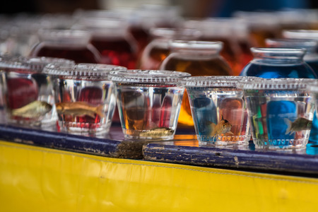 Goldfish prizes sitting in their enclosures on the carnival midway games of chance. Stock Photo