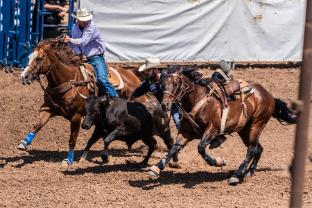 Cowboy leaps from horse while competing in the cattle wrestling competition at Ventura County Fair on August 12, 2018 in California.