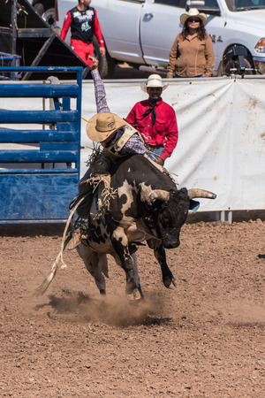 Cowboy leans forward as bull jumps up to rid himself of the rider during the bull riding at the Ventura County Fair on August 12, 2018 in California.