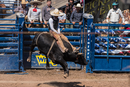 Charro cowboy hangs on with both hands as bull bucks during bull riding at the Ventura County Fair on August 12, 2018 in California.