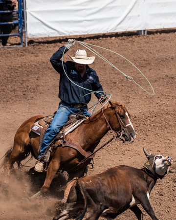Cowboy and horse cut off angle of escape for calf during team cattle roping competition at the Ventura County Fair on August 12, 2018 in California. Editorial