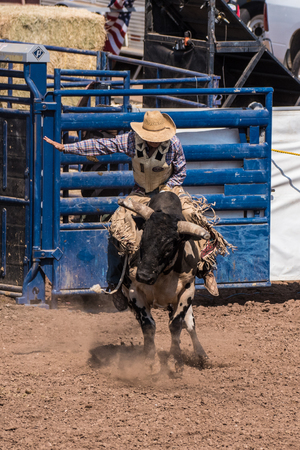 Cowboy and bull rushing out of the gate to see who prevails during the bull riding at the Ventura County Fair on August 12, 2018 in California.