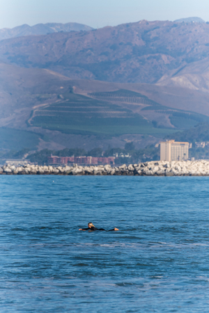 Lone surfer in black wetsuit paddling with Crowne Plaza and Ventura hillsides in background on September 30, 2018 in California. Stock Photo