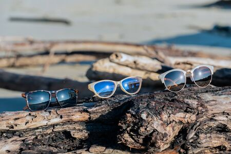 Contemporary sunglasses fashion shows variety of styled lenses while displayed on beach drifwood log texture.