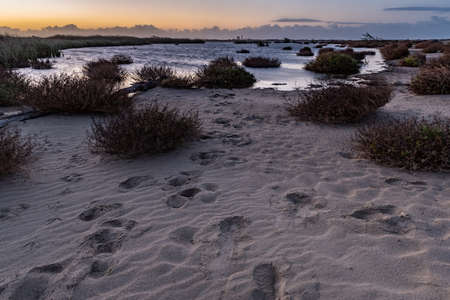 Footprints in the sandy shore of the pond glows as the sun begins to illuminate the eastern horizon of Ventura.
