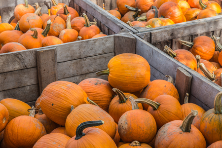 Orange Pumpkins at the Farmers Market Stock Photo