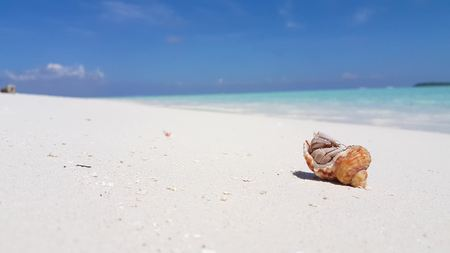 Maldives beautiful beach background white sandy tropical paradise island with blue sky sea water ocean 4k hermit crab