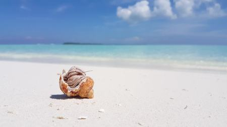 v01573 Maldives beautiful beach background white sandy tropical paradise island with blue sky sea water ocean 4k hermit crab