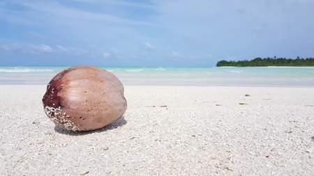 f4036b16087 Maldives beautiful beach background white sandy tropical paradise island  with blue sky sea water ocean 4k
