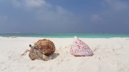 v07590 Maldives white sandy beach hermit crab on sunny tropical paradise island with aqua blue sky sea water ocean 4k