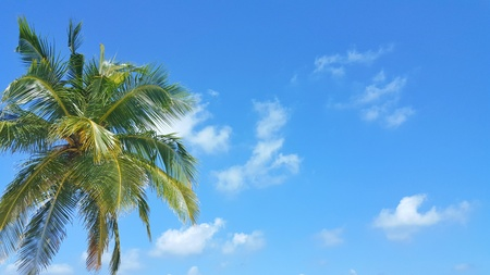 sandbank: Maldives white sandy beach coconut palm trees on sunny tropical paradise island with aqua blue sky sea ocean 4k