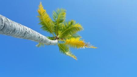 sandbank: P00766 Maldives white sandy beach coconut palm trees on sunny tropical paradise island with aqua blue sky sea ocean 4k