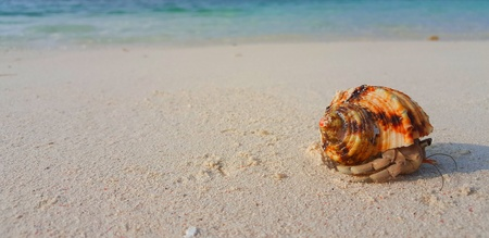 Maldives white sandy beach hermit crab on sunny tropical paradise island with aqua blue sky sea ocean 4k