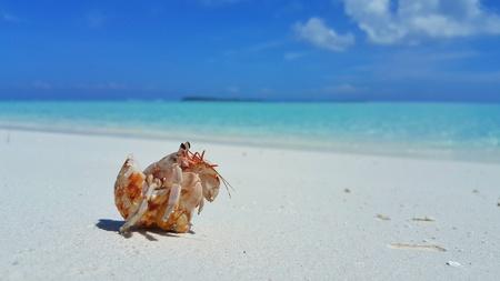 Maldives white sandy beach hermit crab on sunny tropical paradise island with aqua blue sky sea ocean Stock Photo