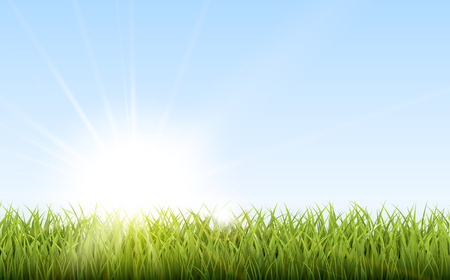 Sunny natural background with vector sun and grass.