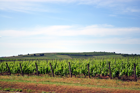 grape field: winery building on the grape field in hungary with bright blue sky Stock Photo