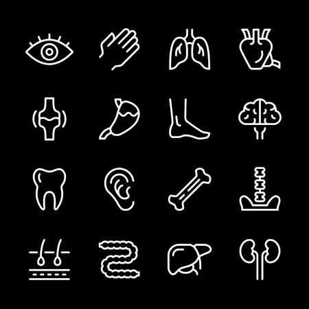 Set line icons of human organs.
