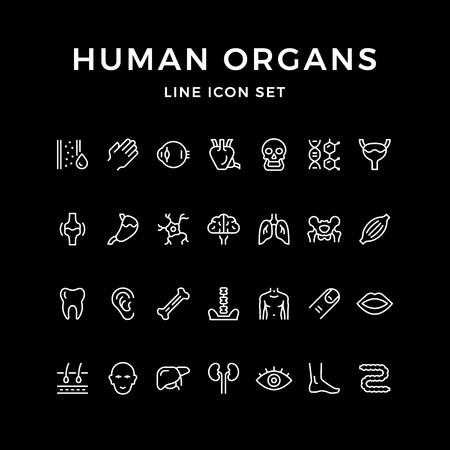 Set line icons of human organs isolated on black. Vector illustration