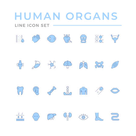 Set color line icons of human organs isolated on white. Vector illustration Ilustracja