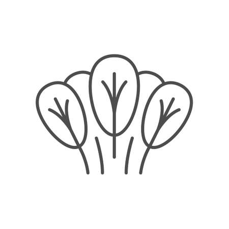 Spinach line icon or vegetable concept