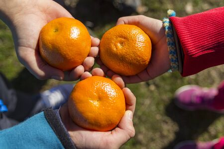 THREE HANDS OF CHILDREN WITH MANDARINES.