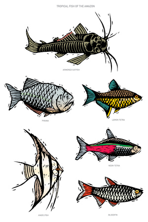 A vector illustration group of six tropical fish from the Amazon region. Image is in a woodcut  linoleum cut style. Armored catfish, piranha, lemon tetra, angelfish, neon tetra, bloodfin.