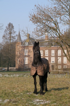 A noble black horse in an aristocratic pose on a frozen paddock in front of an ancient manor. photo