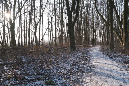 Castle garden winding path in the winter. Beech tree trunks on the hoarfrost forest floor. Some leaves on the bare branches. photo