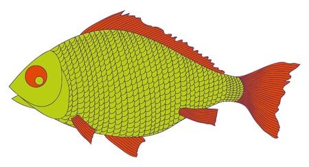 green fish vector illustration