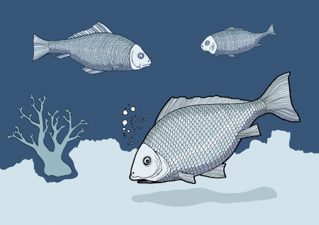Blue fish vector Stock Vector - 16463798